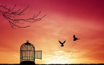 Ali sprejemanje in opuščanje povečuje našo svobodno voljo?