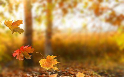 Jesen je čas za detox…našega telesa in doma.
