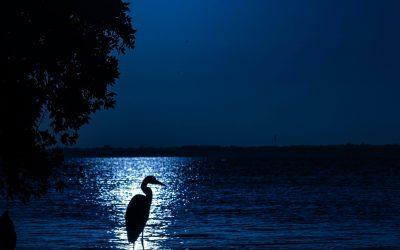 Polna luna 26.5. ob 13:13 v znamenju Škorpijona (Vriščik) in luninem ozvezdju Anuradha