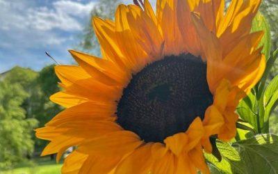 Kako je kaj naše Sonce (Surya) te dni?